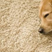 carpet cleaners nj