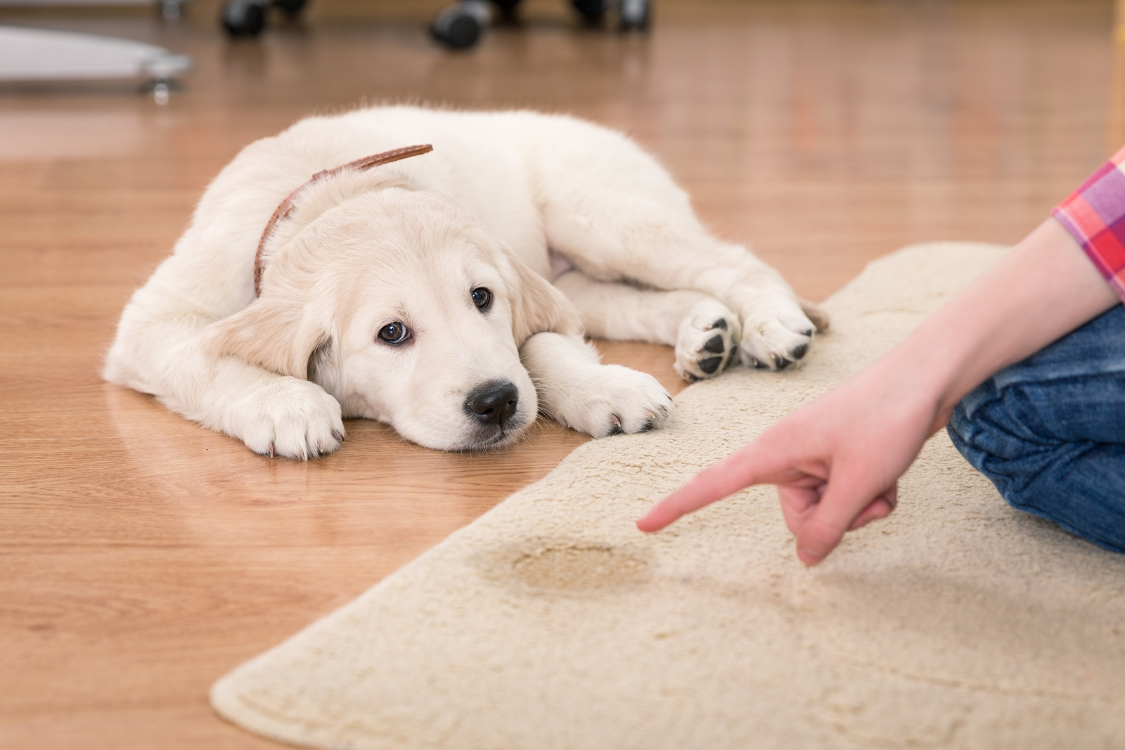 Carpet Cleaning Ocean County